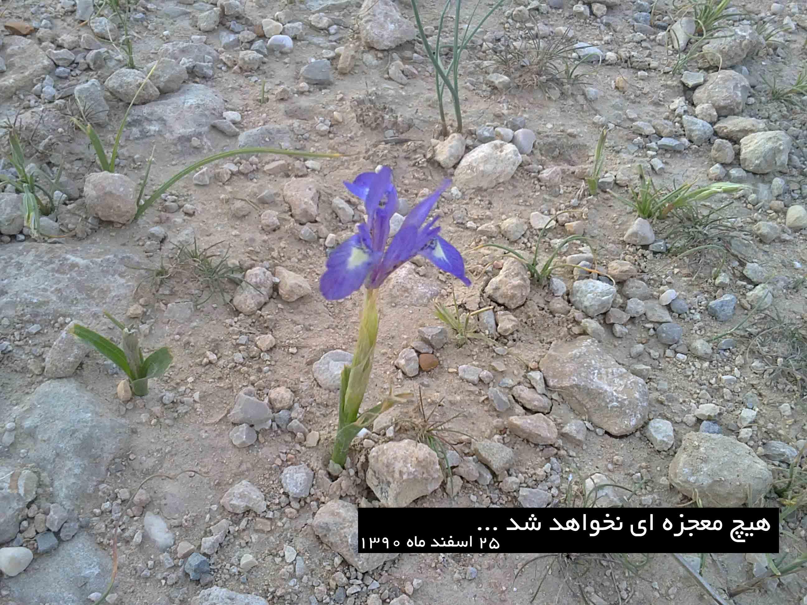 سوق - قبرستان - 25 اسفند ماه 90